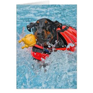 Doberman Swimming Card