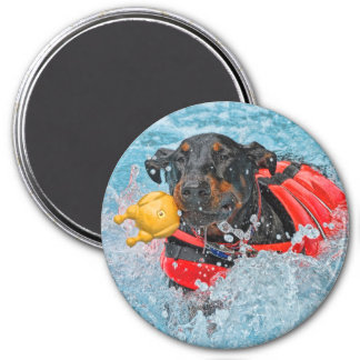 Doberman Swimming With Favorite Toy Magnet