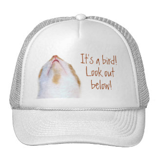 Dodge bird poop trucker hat