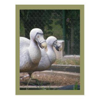Dodo birds postcard