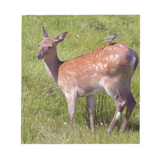 Doe fallow deer and bird notepad