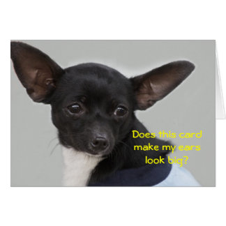Does this card make my ears look big?  Chihuahua