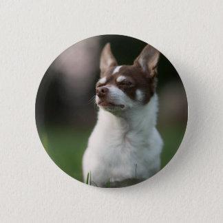 dog 2 inch round button