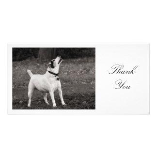 Dog Agog - Thank You Photo Card Template