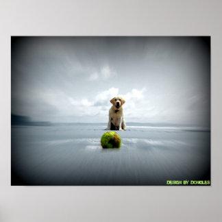 Dog and ball poster