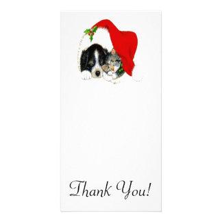 Dog and Cat Sharing Santa Hat Photo Cards