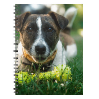 Dog and His Toy Bone Notebooks