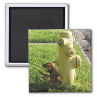 dog and hydrant magnet