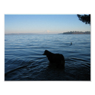 Dog and Mt. Rainier from Penrose Poster