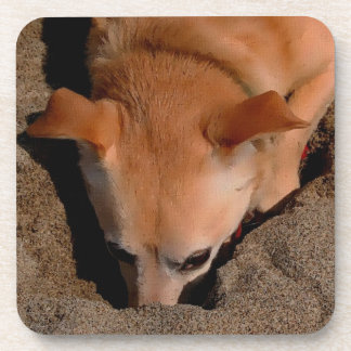 Dog and Sand Artwork Drink Coasters