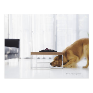 Dog and table postcard