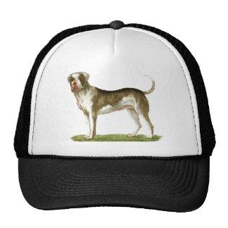 dog art gift set trucker hat