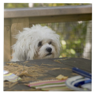 Dog at picnic table ceramic tiles