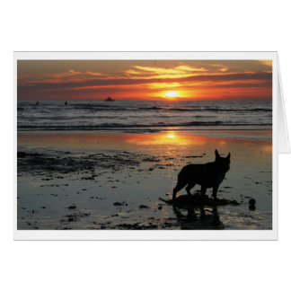 Dog Beach Card