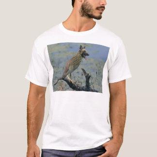 Dog-Bird T-Shirt