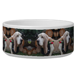 dog Bowl Basset hound