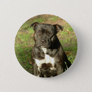 Dog breeds Staffy 2 Inch Round Button