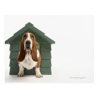 Dog by doghouse postcard