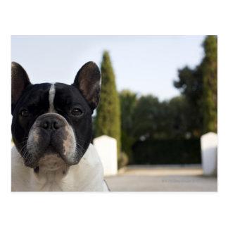 Dog by entrance postcard