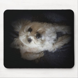 "Dog Cairn Terrier Canine ""Dog Lover"" Mouse Pad"