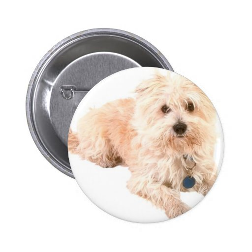 Dog Canine pets animals pet lovers kennels Pin