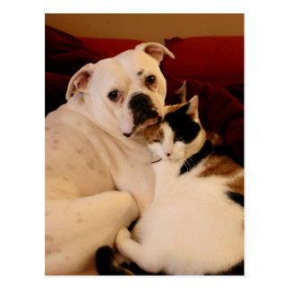 Dog Cat Cuddle Postcard