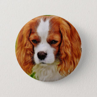 Dog Cavalier King Charles Spaniel Funny Pet Animal 2 Inch Round Button