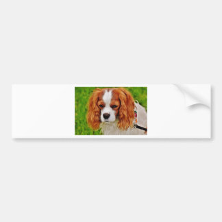 Dog Cavalier King Charles Spaniel Funny Pet Animal Bumper Sticker