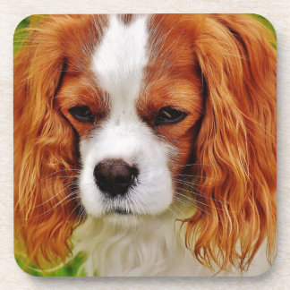 Dog Cavalier King Charles Spaniel Funny Pet Animal Coaster