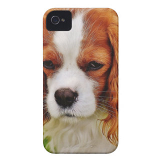 Dog Cavalier King Charles Spaniel Funny Pet Animal iPhone 4 Case-Mate Case