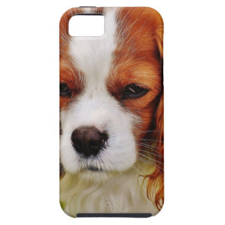Dog Cavalier King Charles Spaniel Funny Pet Animal iPhone 5 Cases