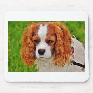Dog Cavalier King Charles Spaniel Funny Pet Animal Mouse Pad