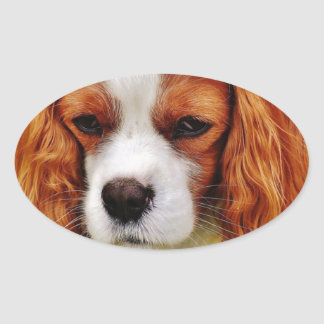 Dog Cavalier King Charles Spaniel Funny Pet Animal Oval Sticker