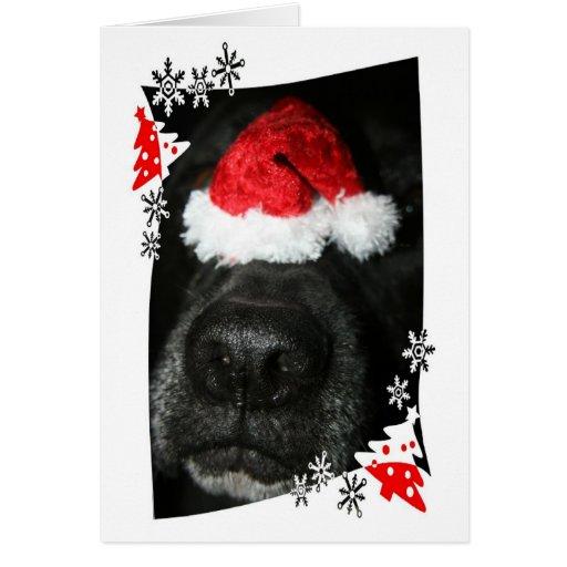 Dog Christmas hat on nose, black lab mix canine Card