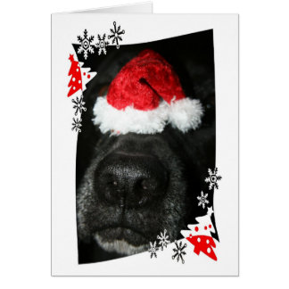 Dog Christmas hat on nose, black lab mix canine Note Card