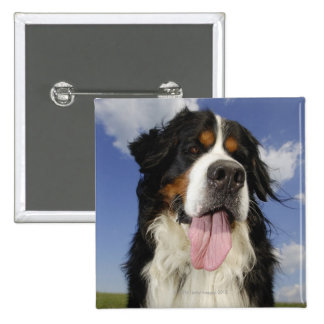 Dog, close-up 2 inch square button