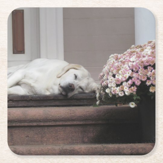 Dog Day Afternoon Coaster