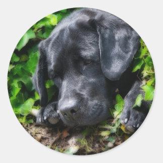 Dog days classic round sticker