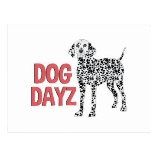 Dog Dayz Postcard