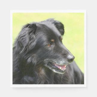 dog disposable napkin