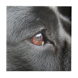 Dog Eye Close Up Tile