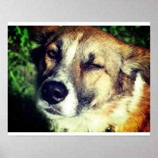 Dog face Photo Value Poster Paper (Matte)