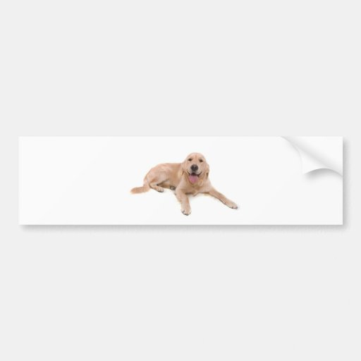 dog - golden retriever bumper sticker