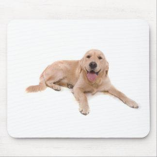dog - golden retriever mouse pad