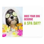 Dog Grooming Postcard-Spa