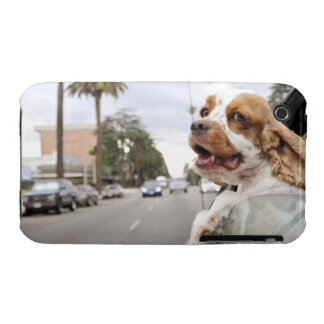 Dog hanging head out of car window iPhone 3 case