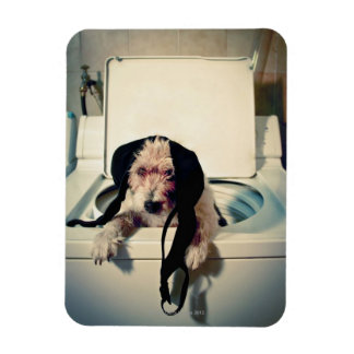 Dog helping out with the wash magnet