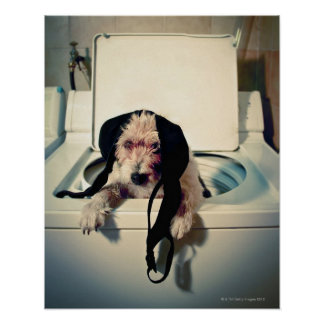 Dog helping out with the wash poster