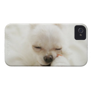 Dog holding toy in mouth iPhone 4 Case-Mate cases