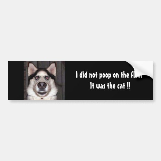 Dog, I did not poop on the floor It was the cat !! Bumper Sticker